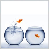 Two fish in fish bowls next to each other. One of the fist is jumping out into the other.